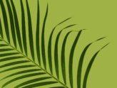 Ogłoszenia na Niedzielę Palmową, czyli Męki Pańskiej